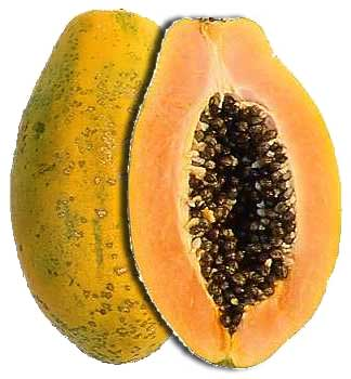 Papaya Pawpaw leaves tea tincture cancer cure resurfaces our